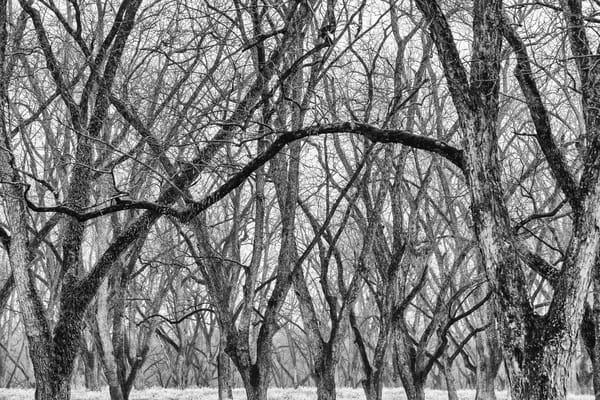 trees--49