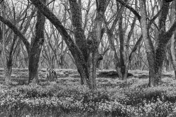 trees--50