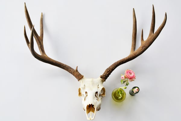 Photograph of a Deer and Blossoms for sale as Fine Art | Wapiti Wildscapes