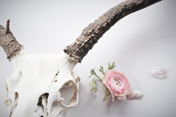 Still Life Photograph of Mule Deer and Ranunculus for sale as Fine Art | Wapiti Wildscapes