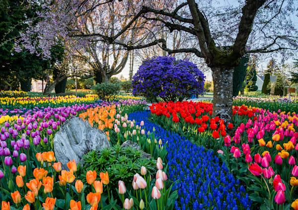 Skagit Tulips-0004