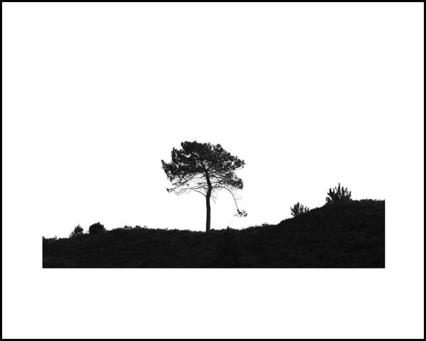 038 Art | Roy Fraser Photographer