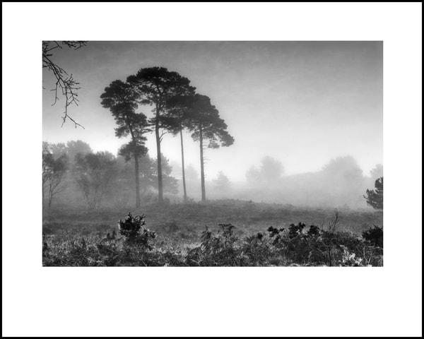 036 Art | Roy Fraser Photographer
