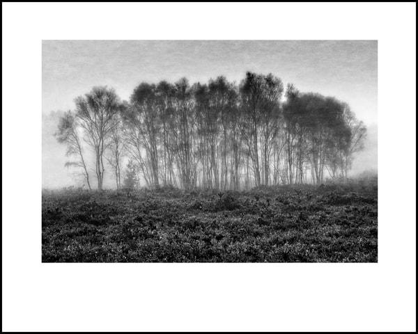 034 Art | Roy Fraser Photographer