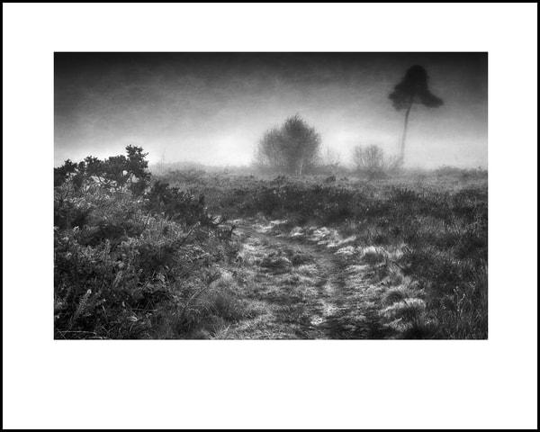 035 Art | Roy Fraser Photographer