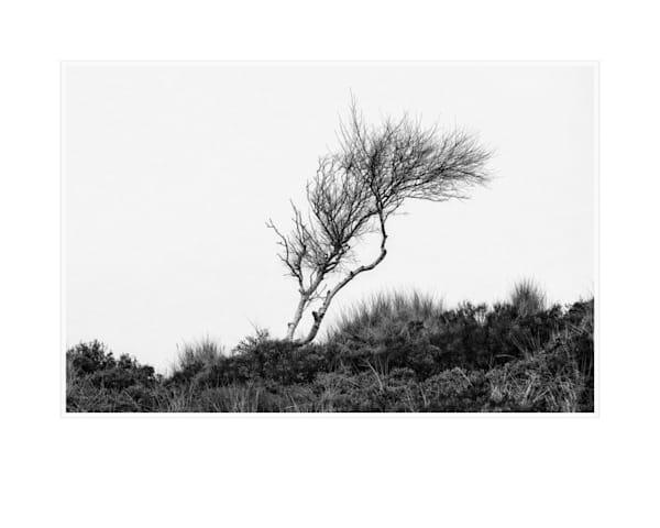 055 Art | Roy Fraser Photographer