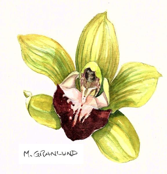 Cymbidium Orchid painting by Mark Granlund