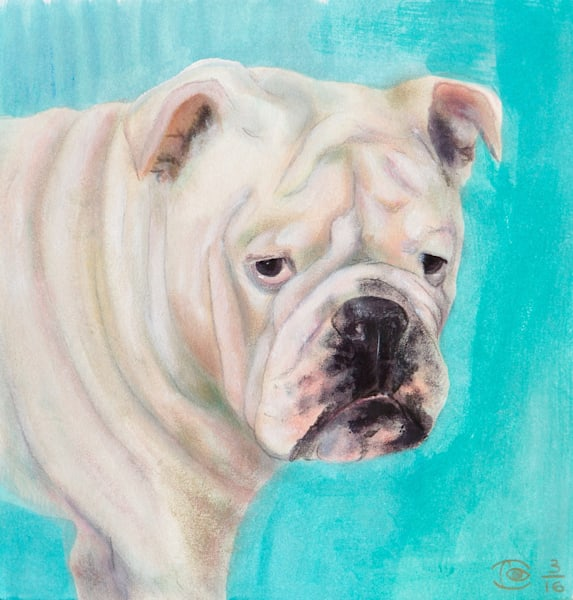 White Bulldog -  Fine Art Prints on Canvas, Paper, Metal & More by Irina Malkmus