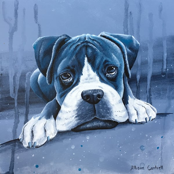 Boxer in Blue print from Allison Cantrell