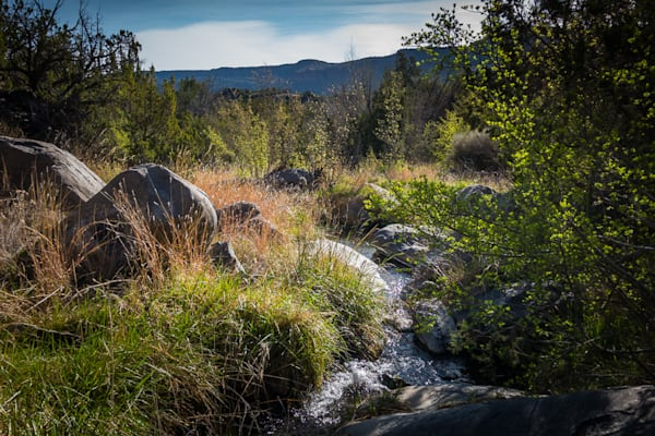 Morning, Pajarito Springs, photography, white rock canyon, landscape, new mexico, red dot trail