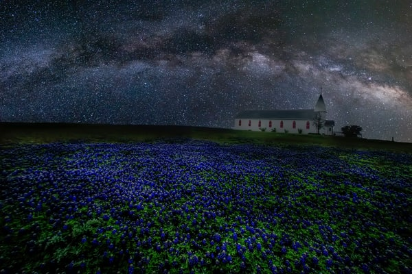 Blue Field Above and Below by Jim Livingston