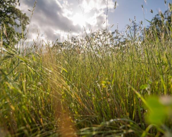 Aetna Springs Grass 2