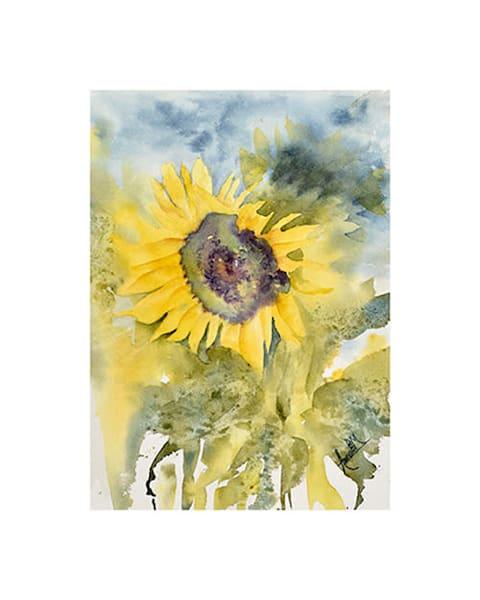 8x10 Yolo Sunflower on Paper