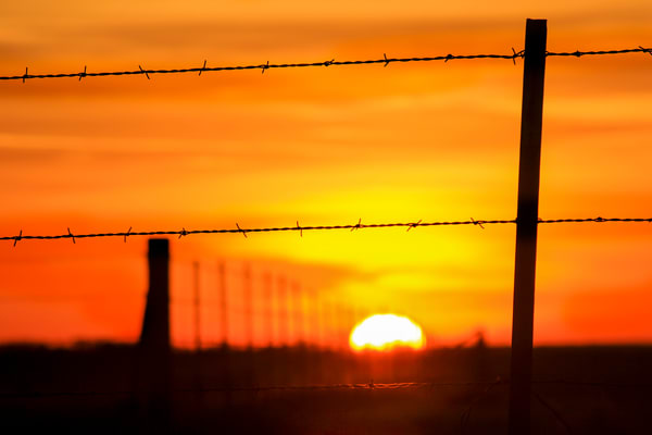 The Fence Line by Jim Livingston