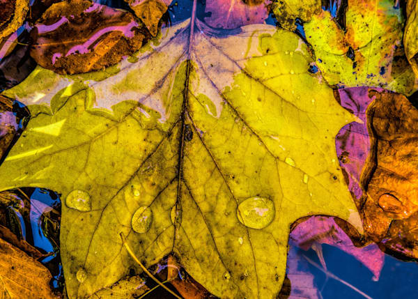 Raindrops on Leaves|Fine Art Photography by Todd Breitling|Todd Breitling Art