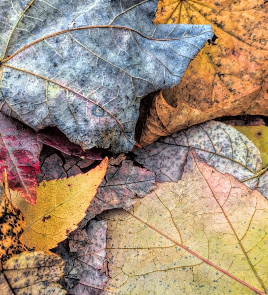 Leaf Pile Up|Fine Art Photography by Todd Breitling|Trees and Leaves|Todd Breitling Art