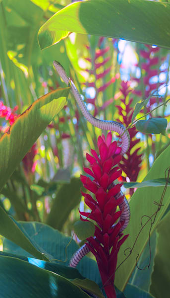 Snake In The Flowers|Fine Art Photography by Todd Breitling|Flowers|Todd Breitling Art
