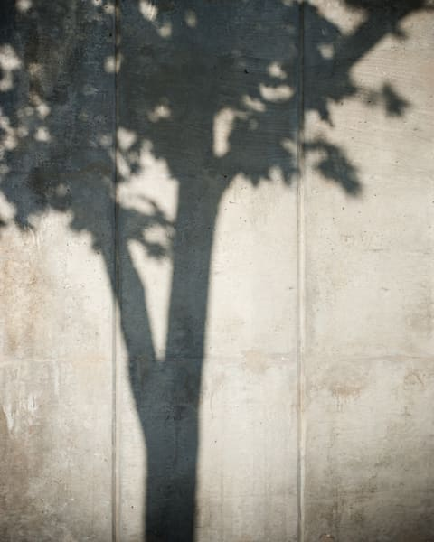 DC Tree 2