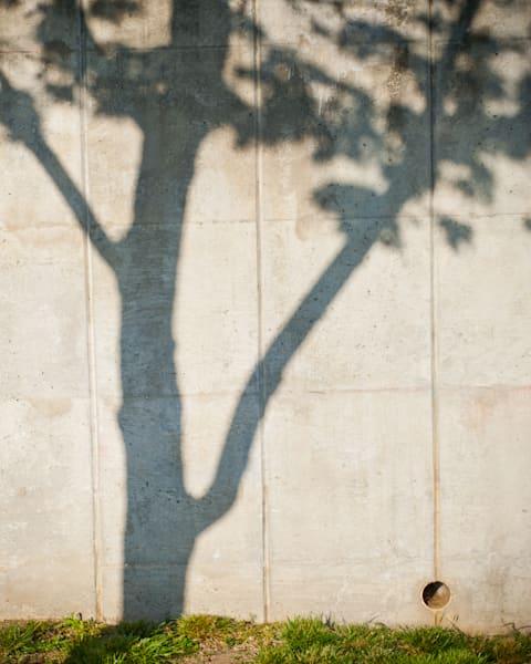 DC Tree 3