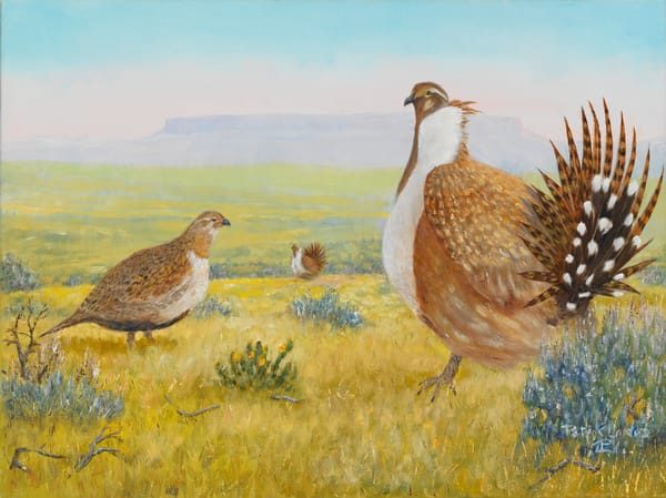 Greater Sage Grouse Oil on Linen Painting by Patrick Landes