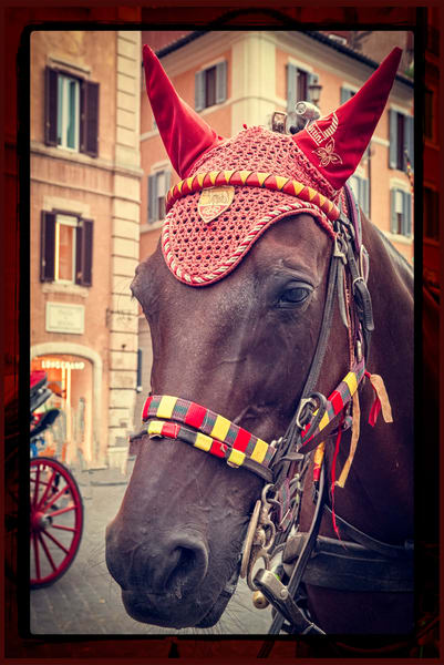 Roman Horse - fine art photography