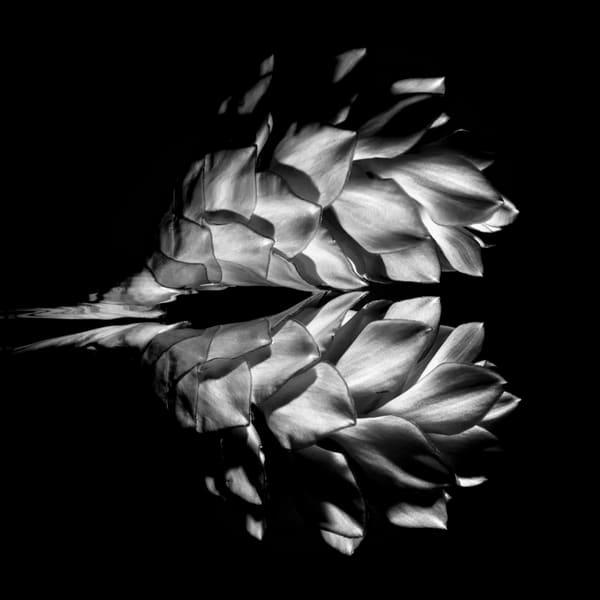 Ginger Flower Monochrome