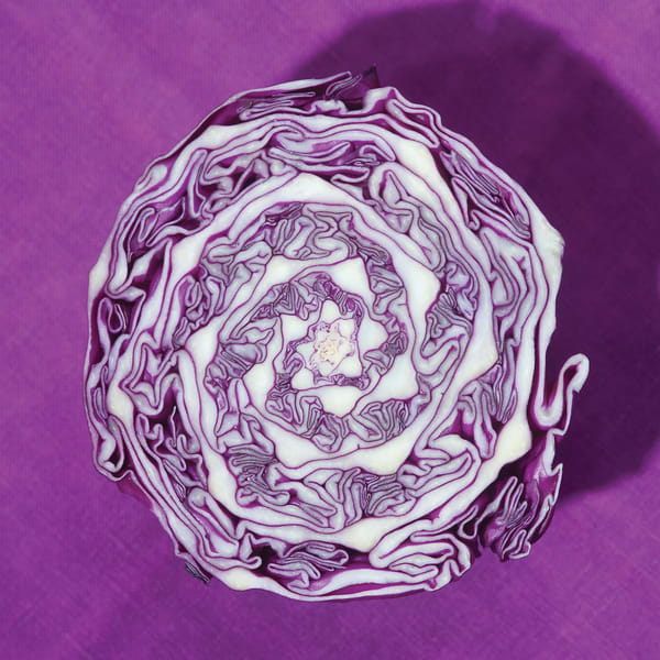 Purple Cabbage Metal Print