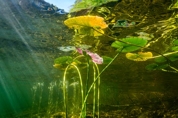 Under a Pond Surface