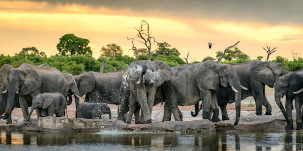 At the watering hole 6