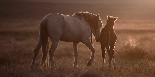 1872 Mustang Mare and Foal