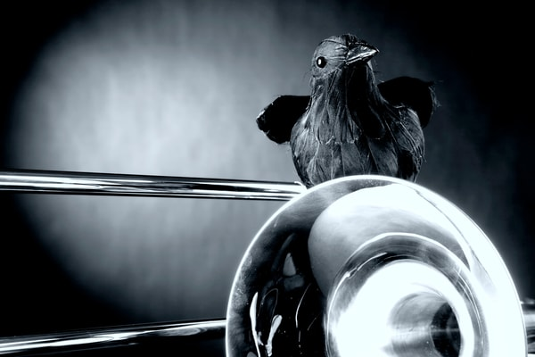 Crow and Trombone in Black and White 2602.16