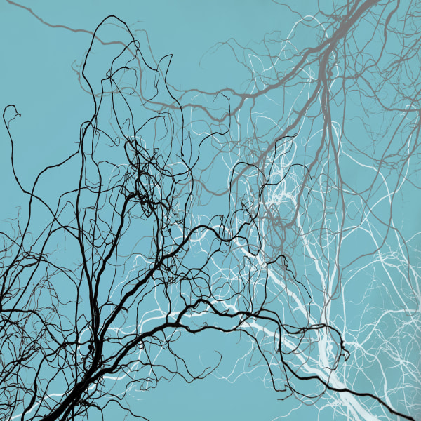 Ghost Branches Art | James Alfred Friesen