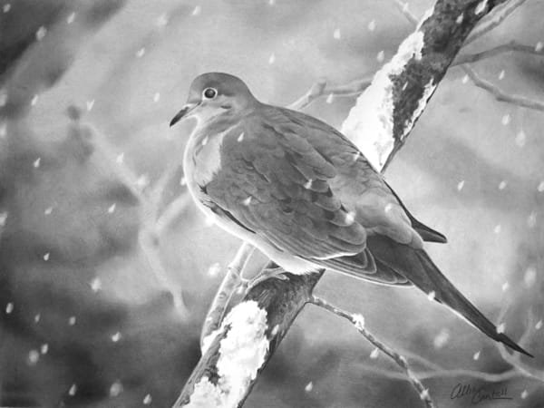 Winter Dove pencil drawing by Allison Cantrell