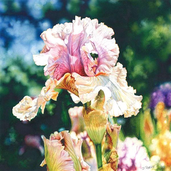 Fine art watercolor of a tall bearded Iris. Original painting, Prints