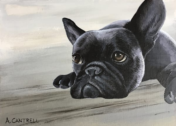 Pup Study 10 french bulldog fine art painting