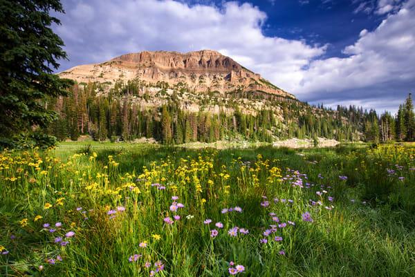 1602  Moosehorn Wildflowers