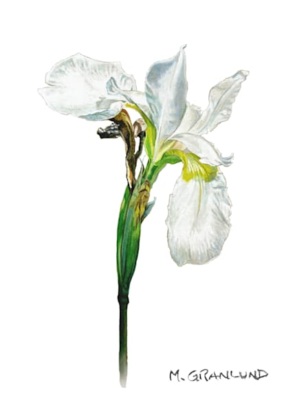 Iris Paintings by Mark Granlund
