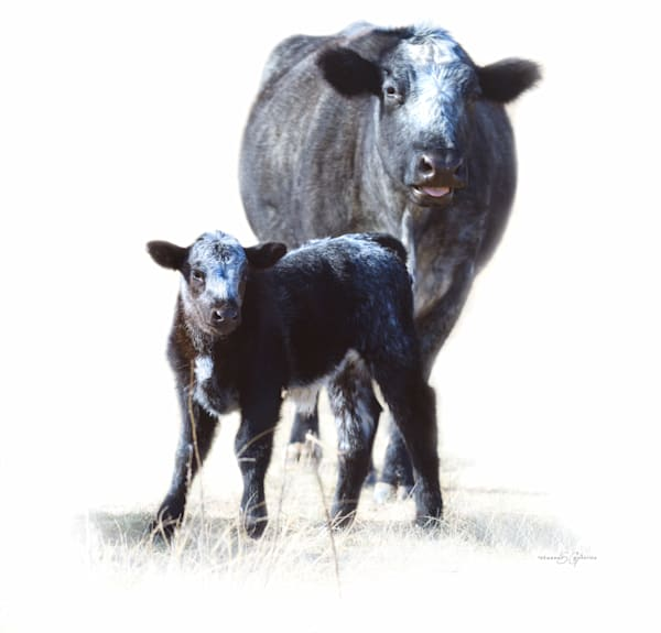 Blueberry and Baby Blue, Western