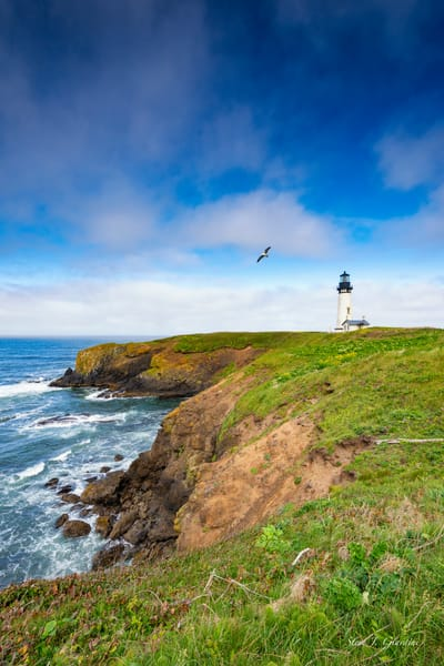 Yaquina Head Lighthouse Seagull (1810123LNND8)