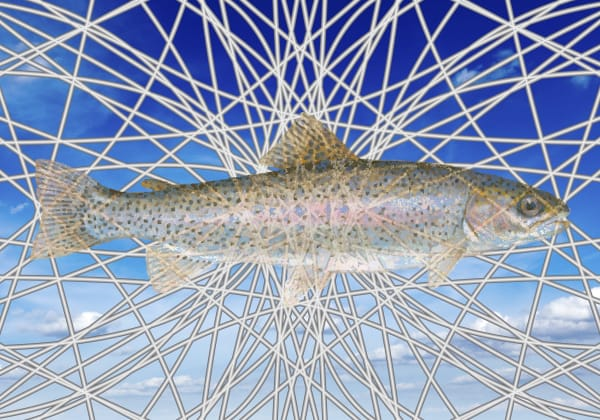 Fish art, Trout art, Trout fishing,  Premium Giclee Print by Peter McClard at VectorArtLabs.com, trout wall art,