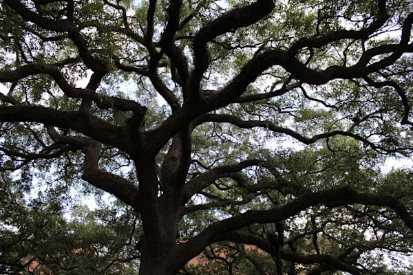 Savannah Tree Framed Matted Photograph Black & White