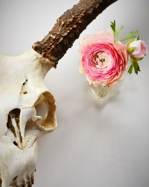 Photograph of a Ranunculus Flower with a Deer Skull for Sale as Fine Art