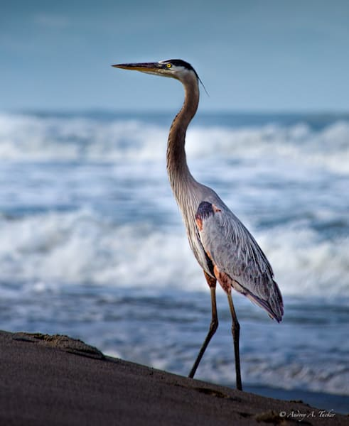 Storking the Beach Fine Art Photograph