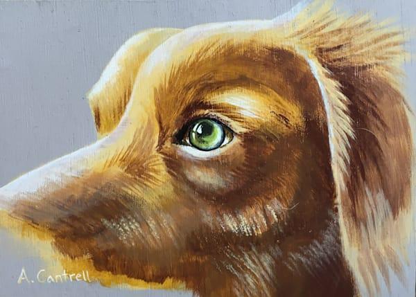 Pup Study 1