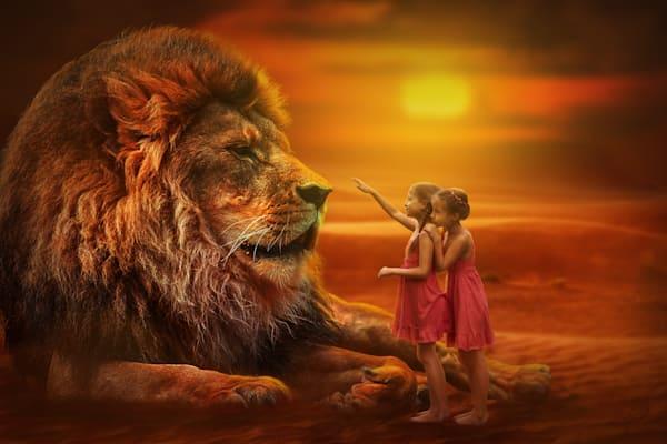 lion-3099986