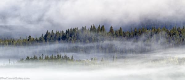 Forest Mist