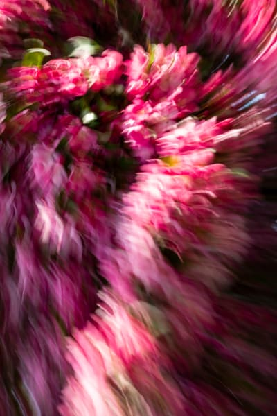 Natural Motion # 41 - Abstract Art Photographs for sale great for interior design. Ron Pickering Photography