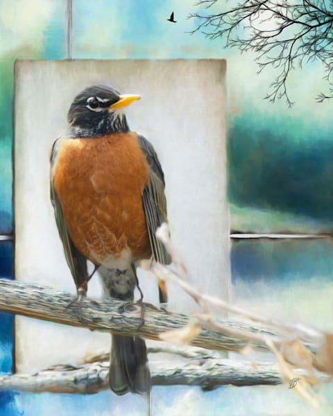 Robin Bird Fine Art Photograph