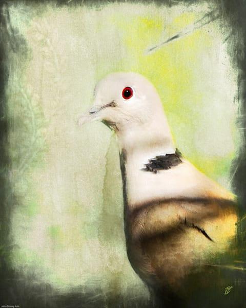 Dove Fine Art Photograph