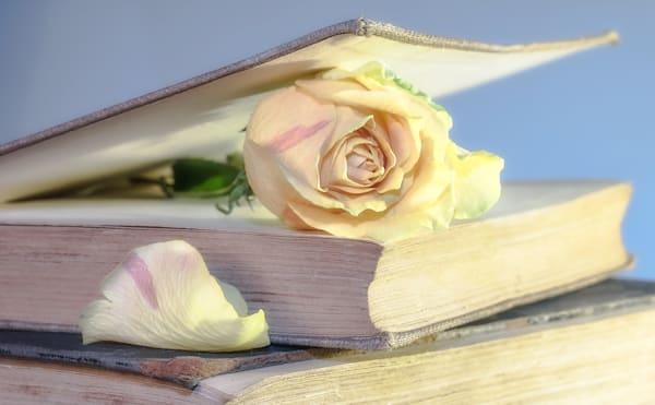 rose-2101475